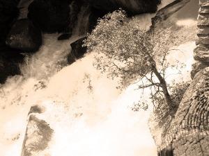 Tree In Waterfall