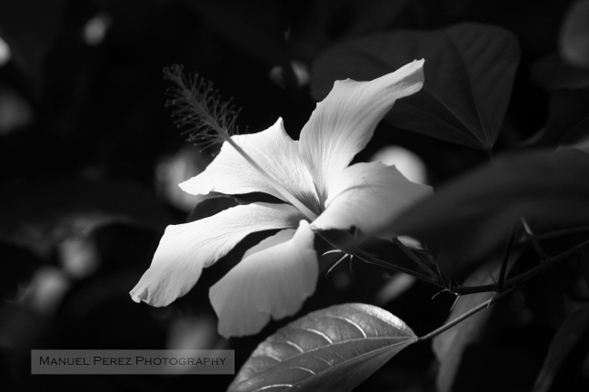 Flower In The Light