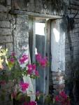 Flowers Outside The Doorway